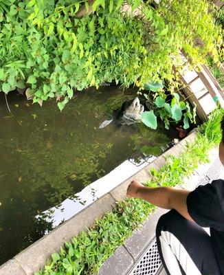 小江戸川越の街並み