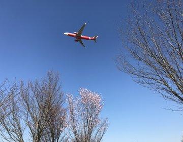 【成田】桜満開の中に大迫力な飛行機!空の駅・さくらの山公園
