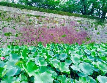 【天文館周辺から徒歩で行ける】鹿児島で楽しむ朝散歩!鹿児島の朝を歴史と共に楽しむ薩摩散策プラン!