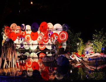 鬼怒川のフォトジェニックな秋の風物詩「月明り花回廊」を楽しむプラン