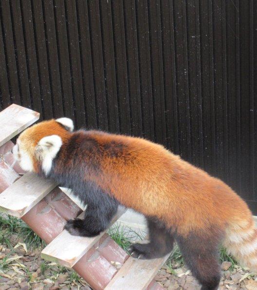 静岡市立日本平動物園レストハウス