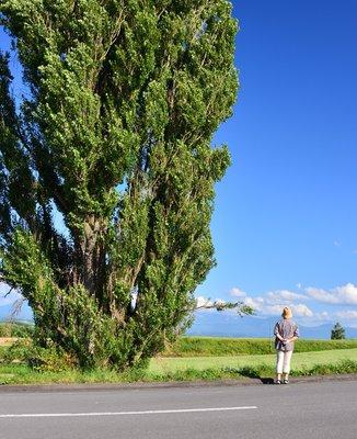 ケンとメリーの木