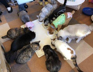 上野駅前♡猫まるカフェ〜駅近の抱っこ出来るお勧めねこCafe