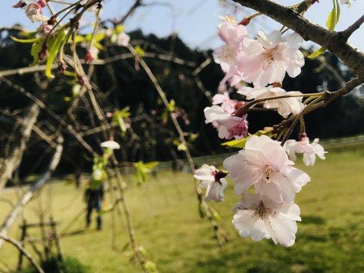 泉南市農業公園 花咲きファーム