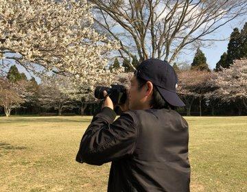 今年お花見満足できなかった方必見!最高のお花見を昭和の森公園で♪