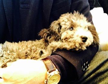 大都会渋谷で最高の癒やしを求めて(都内で犬に触れ合えるカフェ)
