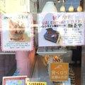 プラチノ 桜新町店 (PLATINO)
