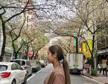 東京駅周辺♡気軽に行ける!都内おすすめお花見スポット