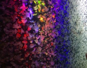 【世界一のクラゲ水族館】まさにアート!普通の水族館と一味違う「加茂水族館」へ!