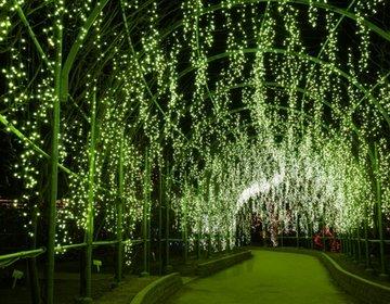 【栃木・足利×イルミネーション×デート】美しい花と光の楽園にようこそ・足利フラワーパーク!