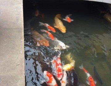 【島根・津和野】歴史的観光スポットが集まる津和野!有形文化財や日本有数の神社などオススメな見所満載!