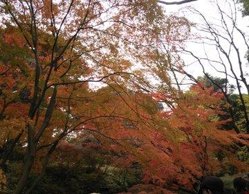 【駒込駅前】山手線内の大名庭園でリフレッシュ!六義園で紅葉と抹茶を楽しむ!