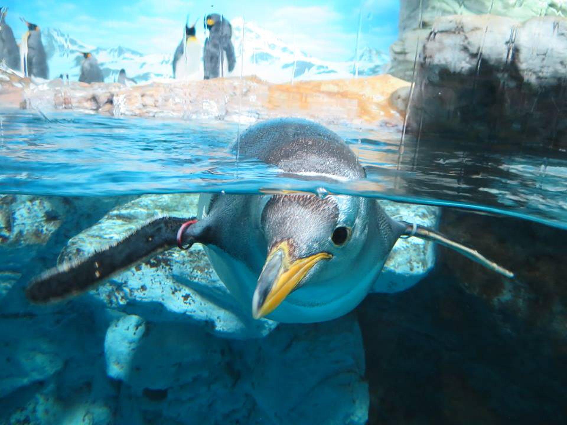 千葉・鴨川シーワールド!夏は水族館の動物に癒されよう♪3cmの距離でペンギンやイルカと会える♡