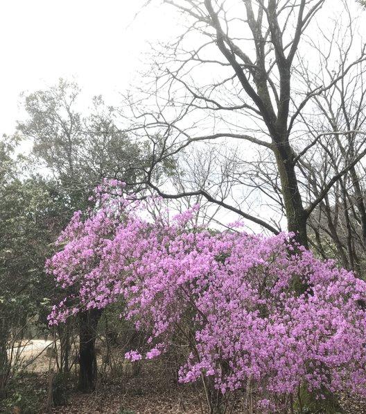 嵐山公園 (亀山地区)