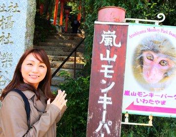 【嵐山・隠れスポット】意外と知らない京都モンキーパークは行って後悔はしないスポットです!