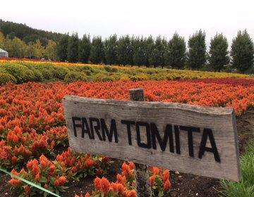 北海道で絶対に外せない富良野の花畑とお泊まりはここ!四季を通して利用できるロッジもご紹介!