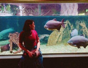 【岐阜女子旅】大人でも楽しめる!アクアトト岐阜でちょっと変わった魚たちと写真を撮ろう♩