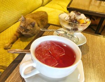 猫に癒される新大久保おすすめ老舗☆韓国伝統カフェで伝統茶とスイーツ!