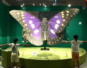 新しい肝試し&自由研究に!「昆虫」展と「エッシャー展」開催中の上野公園に行こう。