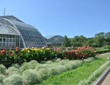 【京都デートスポット】行楽シーズンデートにおすすめ!京都府立植物園でまった〜りデートをしよう!
