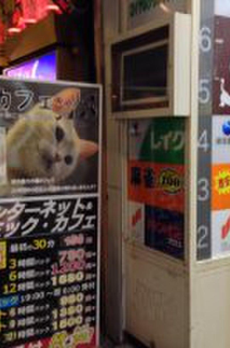 【閉店】猫カフェ きゃりこ 新宿店