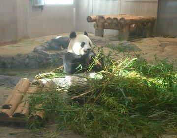 【上野デート】2人で5000円以内!上野アメ横を散策から上野動物園のパンダ
