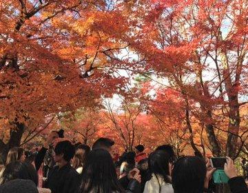 【紅葉の京都をお母さんと旅行】紅葉のお寺と博物館巡りをメインに。【3日目】