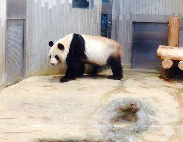 【上野デートにおすすめコース】上野動物園のパンダからアメ横で食べ歩き散策!