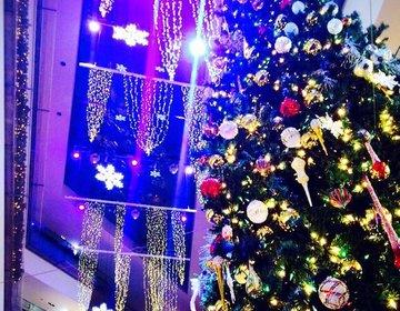 【クイズ!これはどこにあるツリーでしょう?!】都内のおすすめのクリスマスツリーをクイズ形式でご紹介!