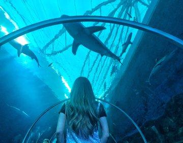 『サメ』がフォトジェニック水族館♡シンガポール・セントーサ島