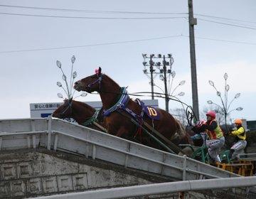 北海道 帯広 ばんえい競馬を楽しみ、帯広グルメを満喫する!【六花亭本店、インデアン、ぱんちょう】