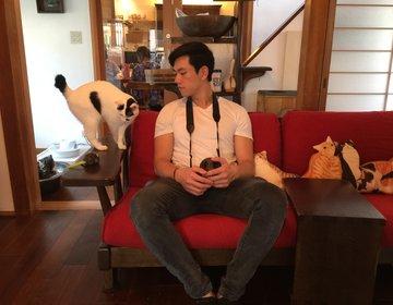 葛西猫カフェ『Necot Coffee House』1時間1,000円❤︎和室で美味しい珈琲に感動!