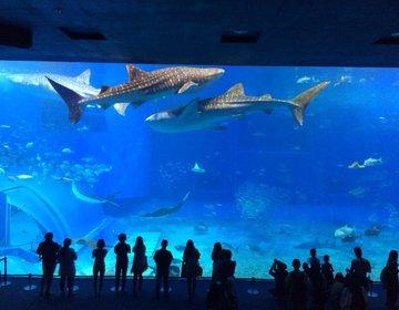 沖縄といったらココ!朝から満喫「美ら海水族館」と嵐のCMで話題「ハートロック」