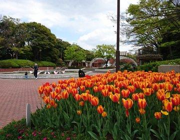 葛西臨海公園だけじゃない! 葛西のオススメ散歩スポット、総合レクリエーション公園