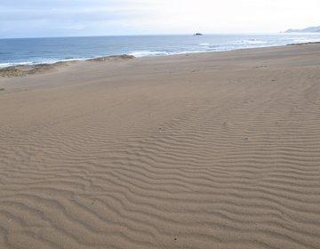 鳥取砂丘でラクダ&ラッキョウの花、砂の美術館でアート、日本海の海の幸を堪能【松葉ガニ、ガザエビ】!