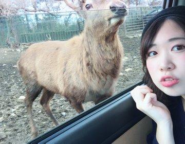 カップルで行きたい那須旅行♡サファリパークで、牧場で!彼女と動物と遊ぶ癒されデートコース♡