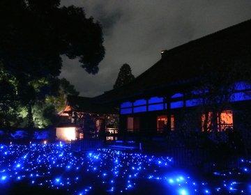【紅葉ライトアップ2016】美しすぎる青蓮院ライトアップはデートにおすすめ!