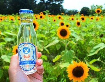 【夏だ!太陽だ!ひまわりだ!】梅田から40分で行ける♩アクセス抜群のひまわり畑はここだ!