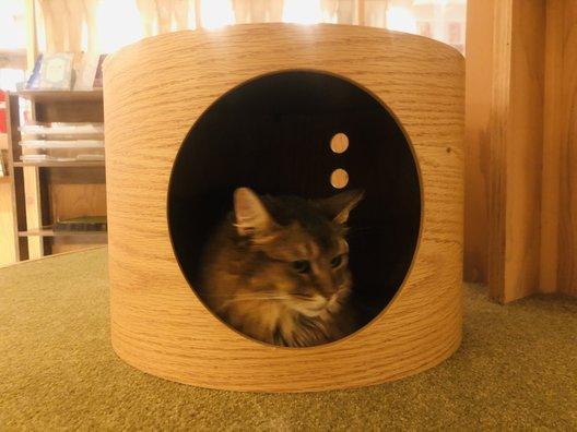 猫カフェ MOCHA (モカ)池袋西口店