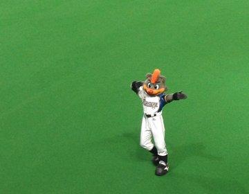 【札幌ドーム】野球が分からない人必見!北海道日本ハムファイターズをファンでなくても楽しめる方法