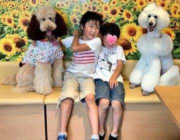 ペットに優しい街二子玉川駅周辺で遊ぶ‼︎家族や恋人、愛犬愛猫とまったり出来るカフェも!