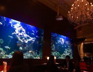 まるで水族館のようなお洒落なお店でまったりお酒を。新宿のアクアリウムダイニング!