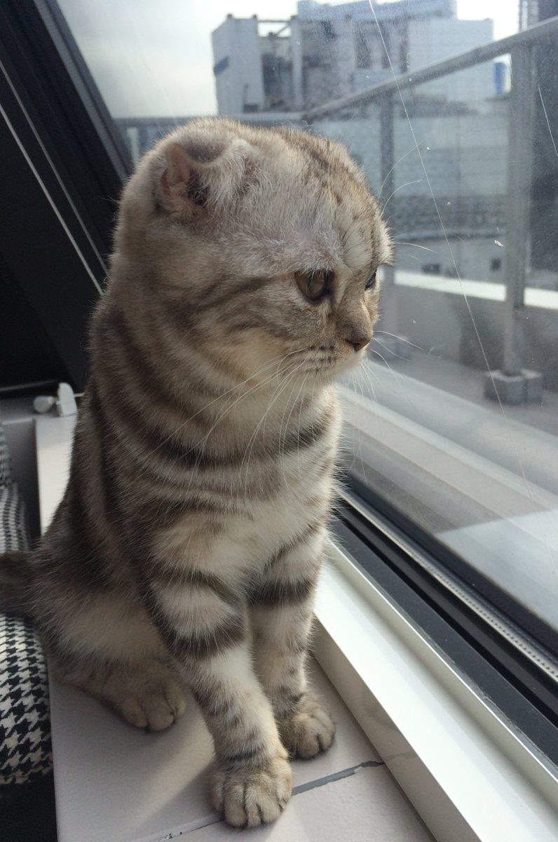 猫カフェMoCHA 渋谷店