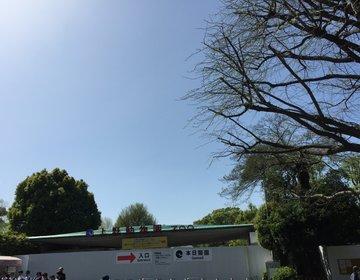 GWにもオススメ!今ならパンダが見れる!上野動物園へ!