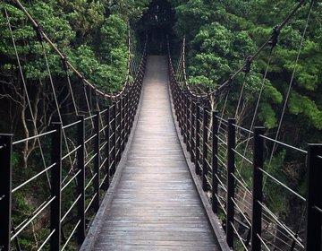 【伊豆・自然】ドキドキ吊り橋効果!?午後活にオススメ!東京から2時間でいけちゃう♪伊豆小旅行