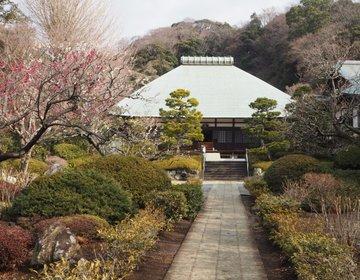 【鎌倉さんぽ】桜もいいけど、梅もいいね!早春の鎌倉 隠れ癒しスポット 浄妙寺♪
