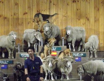 マザー牧場で、動物ふれあいホワホワデートにおすすめ!!