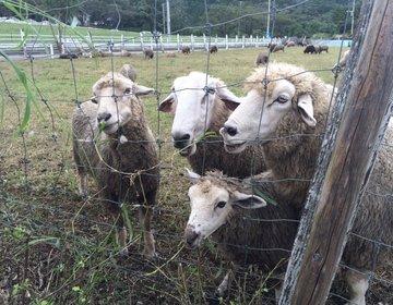 【大自然を満喫!!】神奈川県 服部牧場~家族や友人とのおでかけ、デートにもおすすめ~