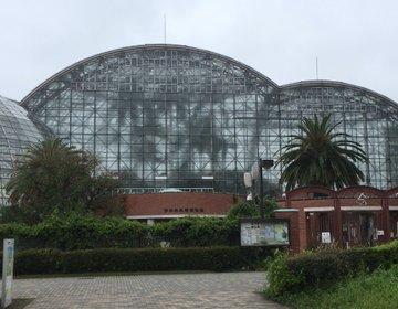 植物館にマリーナに!新木場の「夢の島」で南国の空気を味わおう!