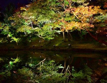 【京都】高台寺&圓徳院で夜の紅葉とライトアップを楽しむ最強穴場デートプラン!